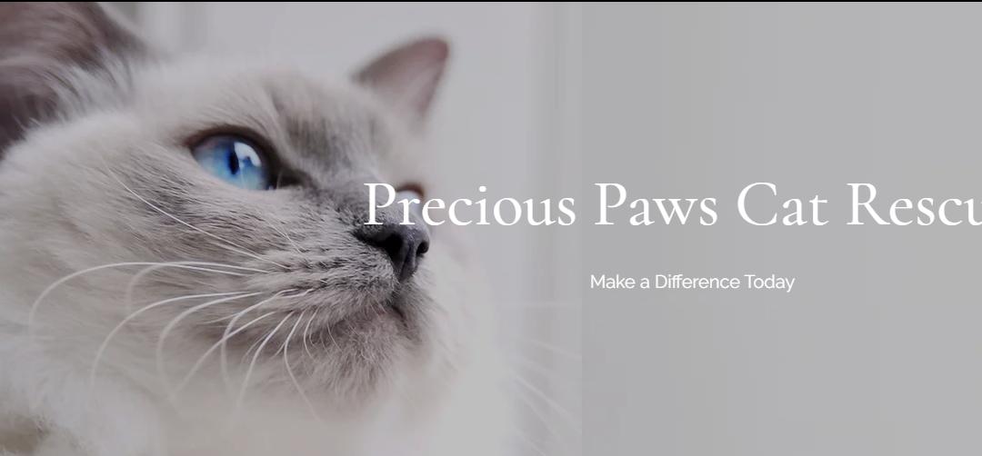 Precious Paws Cat Rescue