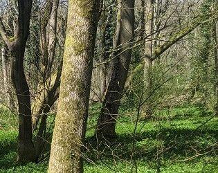 Draft TRDC Tree Strategy